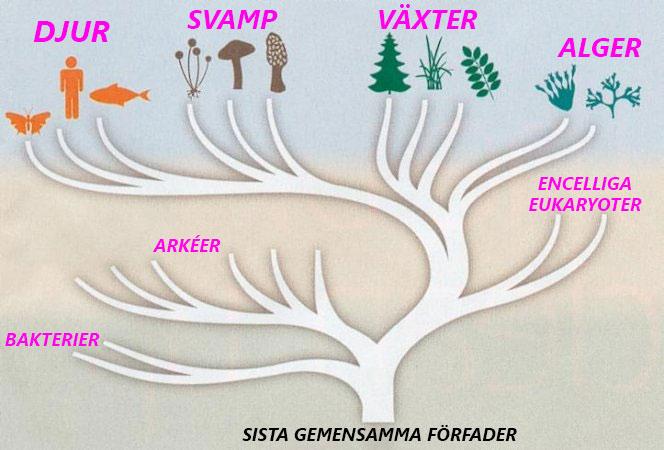 Skillnad mellan djur och växt och svamp