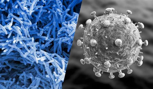 Skillnaden mellan virus och bakterier
