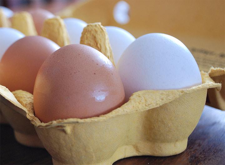 Skillnaden mellan vita och bruna ägg